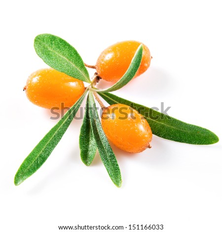Sea buckthorn berries isolated on the white - stock photo