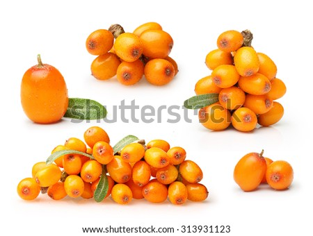 Sea buckthorn isolated on the white background - stock photo