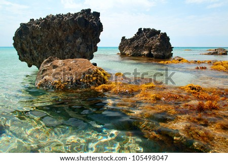 Sea Coast with Rocks and sea plants - stock photo