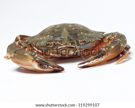 sea crab isolated on white background  - stock photo