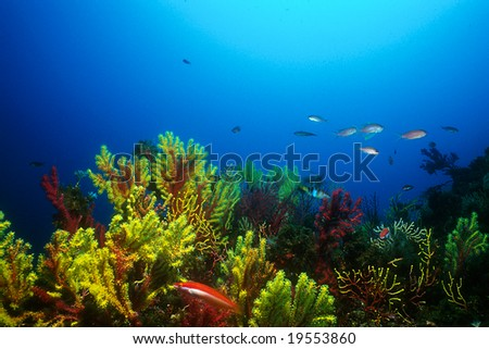 Sea fans in a colorful Mediterranean seabed - stock photo
