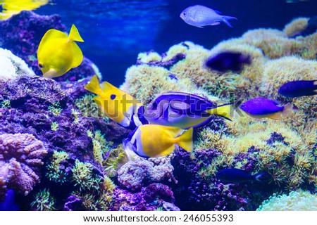 sea fish and corals - stock photo