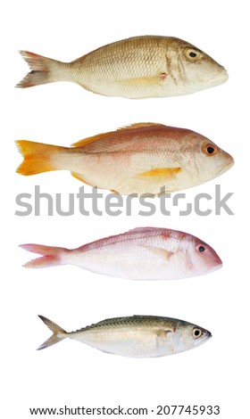 Sea fish collection on white background - stock photo