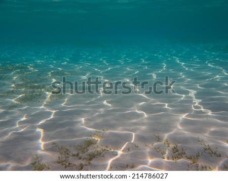 Sea grass on sandy bottom underwater background - stock photo