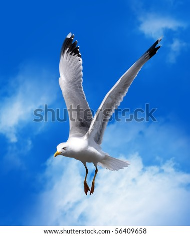 sea gull flying in a blue sky - stock photo