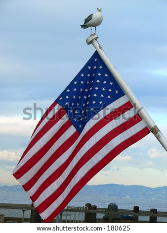Sea gull on top of a flag pole - stock photo