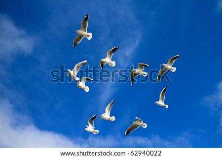 sea gulls in bluu sky - stock photo