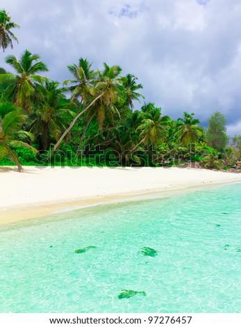 Sea Jungle Tranquility - stock photo