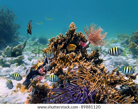 Sea life underwater with coral, marine worm and tropical fish in the Caribbean sea, mexico - stock photo