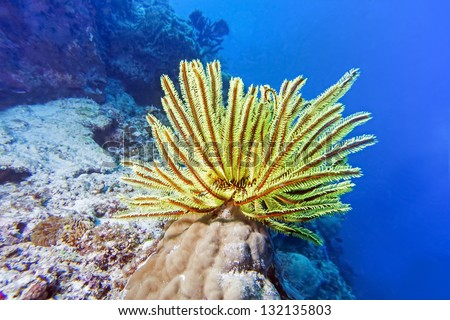 sea lily - stock photo