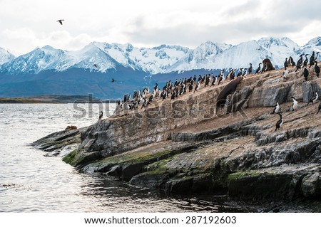 Sea lion and King Cormorant colony sits on an Island in the Beagle Channel. Tierra del Fuego, Argentina - Chile - stock photo