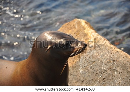 Sea lion Galapagos Islands - stock photo