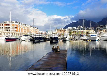 Sea lion on a jetty in Cape Town V&A Waterfront - stock photo