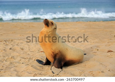 Sea lion pup having rest on the Hermosa beach, California, USA