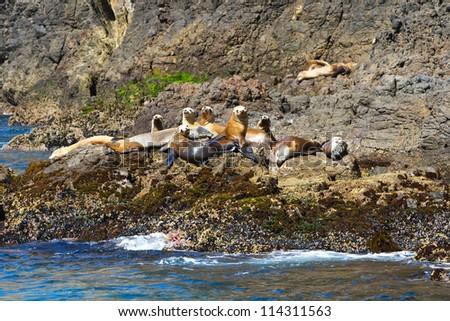 Sea lions, Channel Islands National Park, California, USA - stock photo