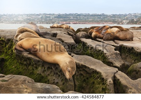 Sea Lions sleeping on rocky beach in San Diego, California in La Jolla Cove - stock photo