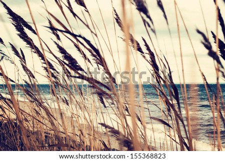 Sea oats in the summer wind. Travel concept. Vintage processed - stock photo