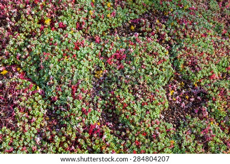sea of wallpepper - stock photo