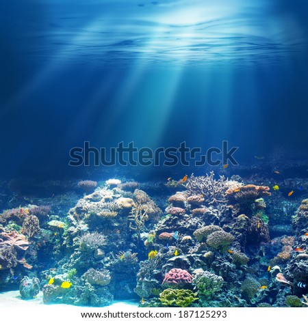 Sea or ocean underwater coral reef - stock photo