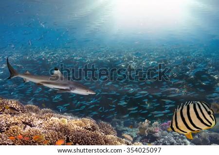 Sea or ocean underwater coral reef - stock photo