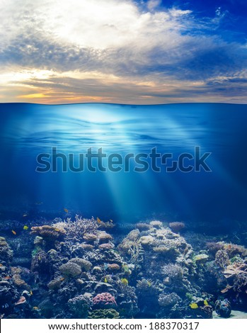 sea or ocean underwater life with sunset sky - stock photo