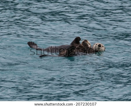 Sea Otter and Pup  - stock photo