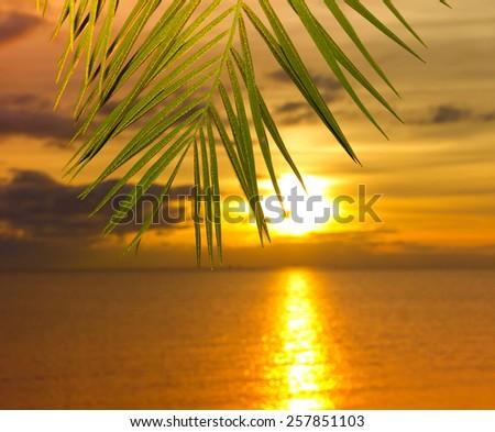 Sea Palm Sunset  - stock photo