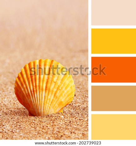 Sea scallops shell on a beach. color palette swatches.  - stock photo