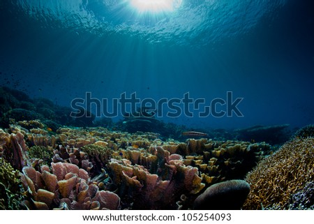 sea scape aquarium - stock photo