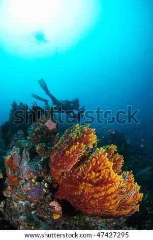 sea scape at Ambon, Maluku, Indonesia - stock photo