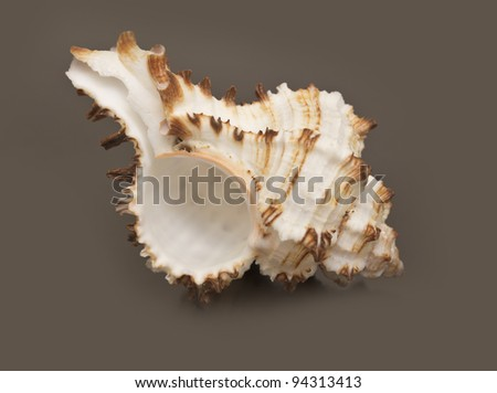 sea shell - stock photo