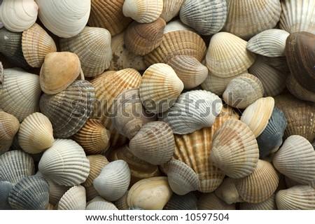 sea shell close up - stock photo
