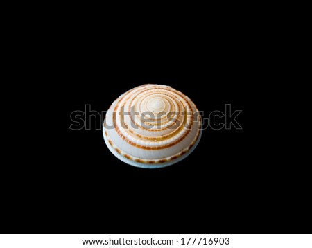 sea shell conch isolated on black background, collected in China south sea 40 years ago - stock photo