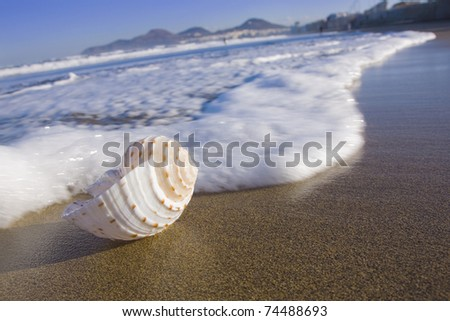 Sea shell in the surf zone on Las Canteras beach on Gran Canaria. - stock photo