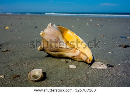 sea shell on a beach of atlantic ocean at sunset - stock photo