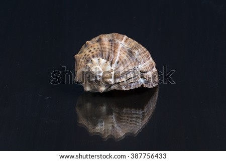 Sea shell on the mirror wooden table - stock photo
