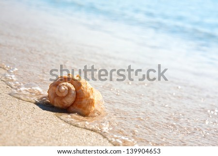 Sea shell on the sandy beach - stock photo