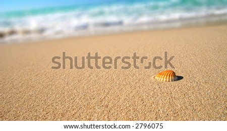 Sea shell on the tropical sandy beach in perfect natural harmony - stock photo