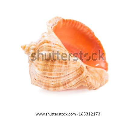 Sea shell on white background - stock photo