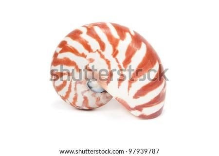 Sea Shell on white background. - stock photo