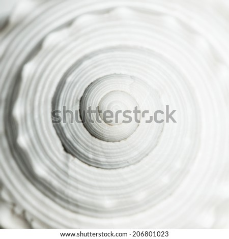 Sea shell spiral - stock photo