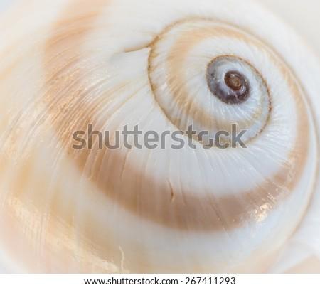 Sea Shell Swirl - stock photo