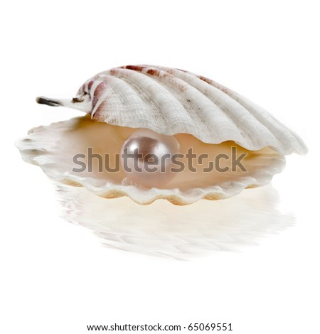 sea shell with pearl on white background - stock photo