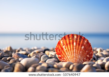 Sea shell with sea and blue sky on background - stock photo