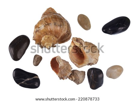 Sea shells and pebbles on white background - stock photo
