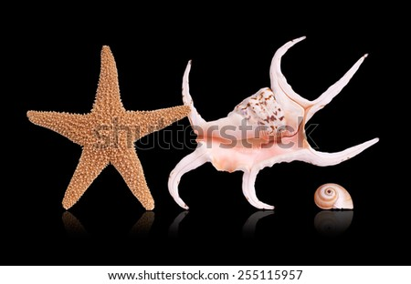 Sea shells and starfish on black background.  - stock photo