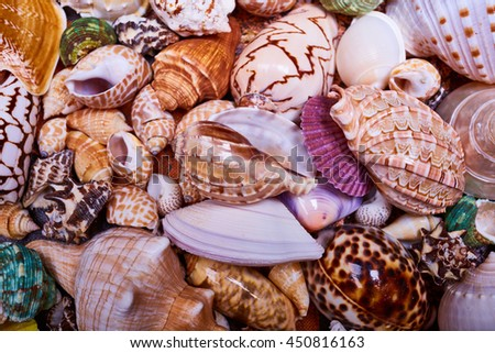 sea shells background - stock photo
