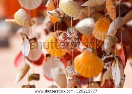 Sea shells close up in Santa Maria beach in Cape Verde - stock photo