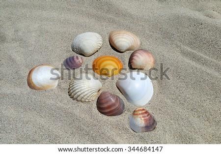 Sea shells closeup on the sand background - stock photo