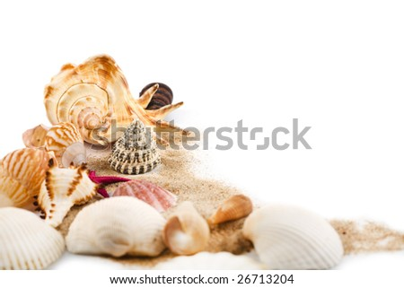 sea shells in sand isolated - stock photo